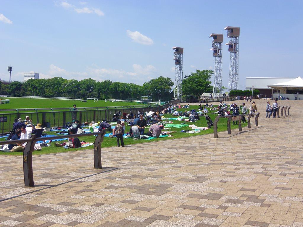 東京競馬場の芝生席